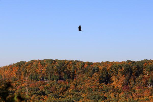 Fall at Rattlesnake Point