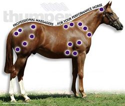 """Equine pressure points (would you believe that """"horse massager"""" is actually a proper profession???)"""