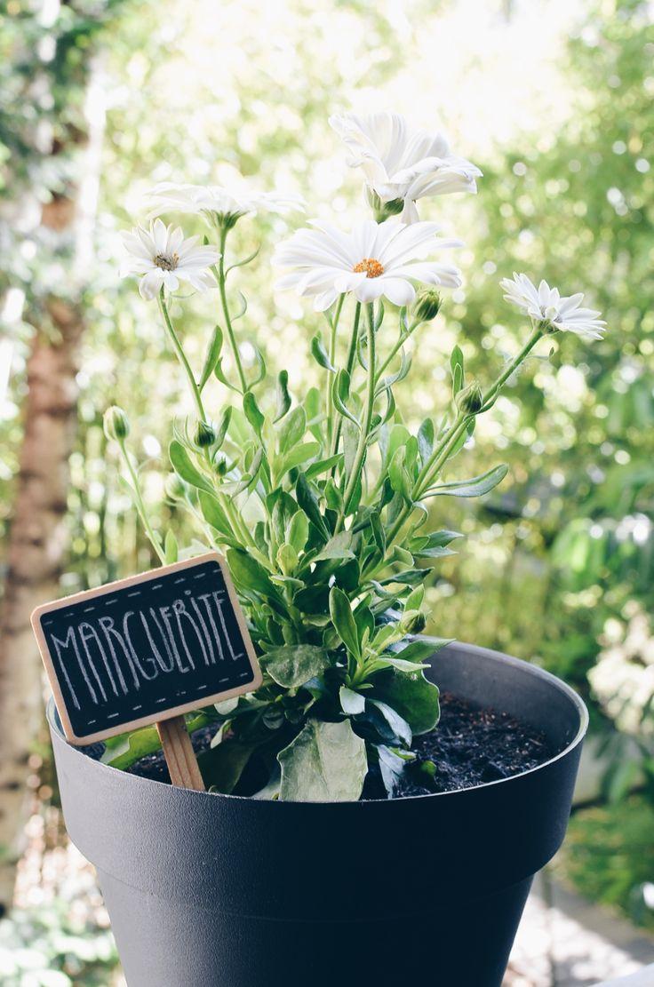 • F L O W E R S • Je vous présente Marguerite. J'ai flashé sur elle au marché, je ne pouvais pas ne pas l'adopter ! #Flower  #Marguerite