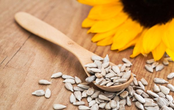 Sunflowers, native to America, have been widely used for the extraction of cooking oil since ages. Here are the benefits of using sunflower oil for your health, skin and hair!