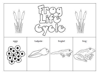 Worksheets Life Cycle Of A Frog Worksheet 1000 ideas about frog life cycles on pinterest the paper maid cycle httpwww com