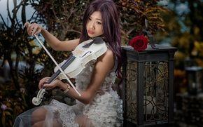 chica, Asiático, violín, linterna, rosa, humor