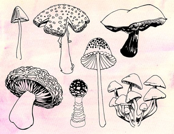 Magic Mushrooms - Clip art from Rutabaga and Sally