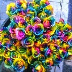 ghanflorist: Jual bunga mawar import jakarta