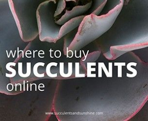 Beautiful Succulent Photos from Jeanne Meadow's Garden | Succulents and Sunshine