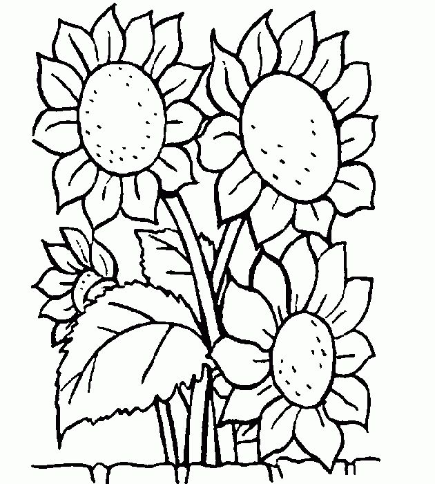 17 mejores ideas sobre dibujo de girasol en pinterest - Cenefas para dibujar ...