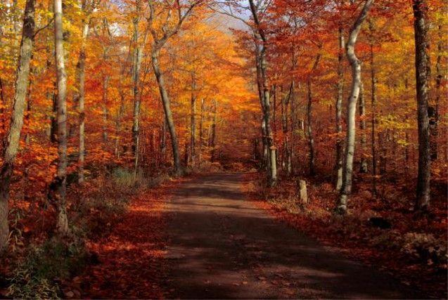 DOOR COUNTY, STATI UNITI – Tra le meteautunnali non manca mai, forse perché la Door County, con il foliage, è tra le destinazioni più suggestive al mondo. Un paesaggio così unico da convincerel'Ente del Turismo del Wisconsin a elaborare una mappa interattiva per guidare i visitatori in base ai colori dei boschi