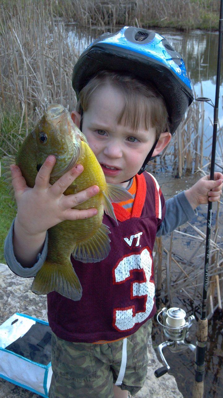 Freshwater fish kauai - Small Guy Small Pond Big Bluegill Mark Taylor S Wild Life Roanoke