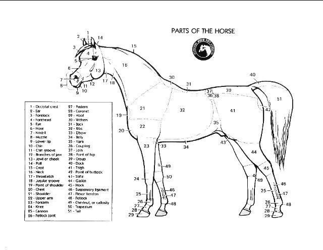 591 best Horse information images on Pinterest Horse facts - equine release form
