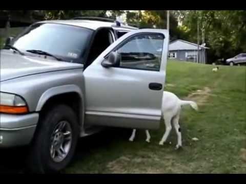 video lucu binatang: funny animals taking baths interrupting