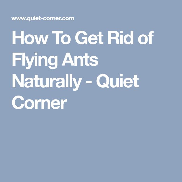 How To Get Rid of Flying Ants Naturally - Quiet Corner