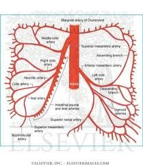 Image result for superior mesenteric artery