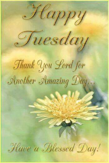 379 best daily greetings images on pinterest tuesday buen dia and happy tuesday thank you lord lord grateful tuesday tuesday quotes happy tuesday tuesday quote happy tuesday quotes m4hsunfo