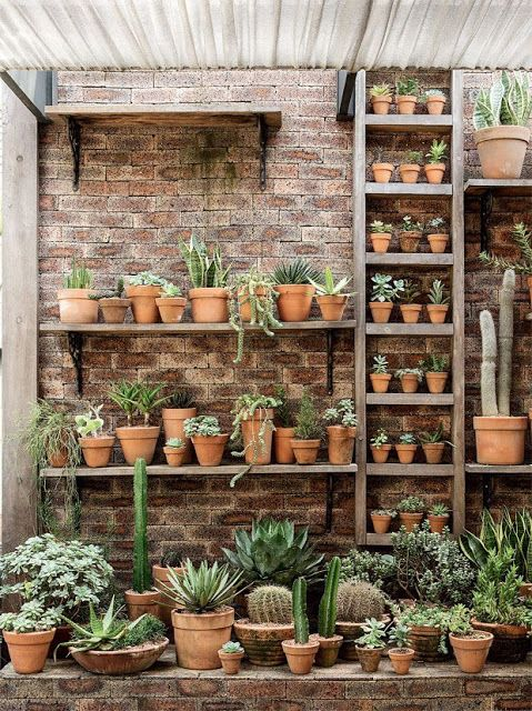 Potting Shed | Succulents in clay pots
