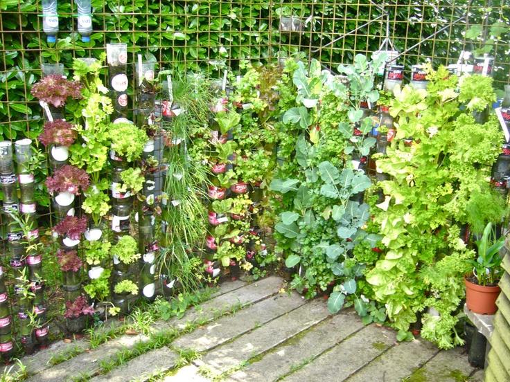 Plastic bottle garden garden pinterest for Garden design using plastic bottles