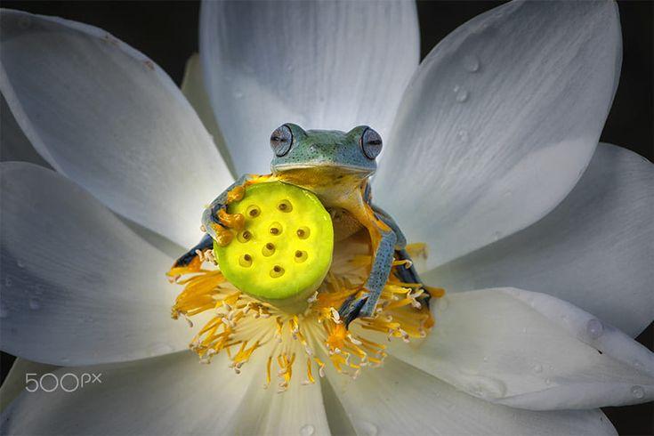 Staring Frog by Ellena Susanti