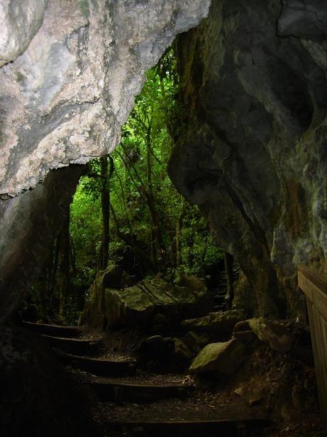 Ruakuri reserve, walk by Waitomo stream, through limestone tunnels, glow-worms at night