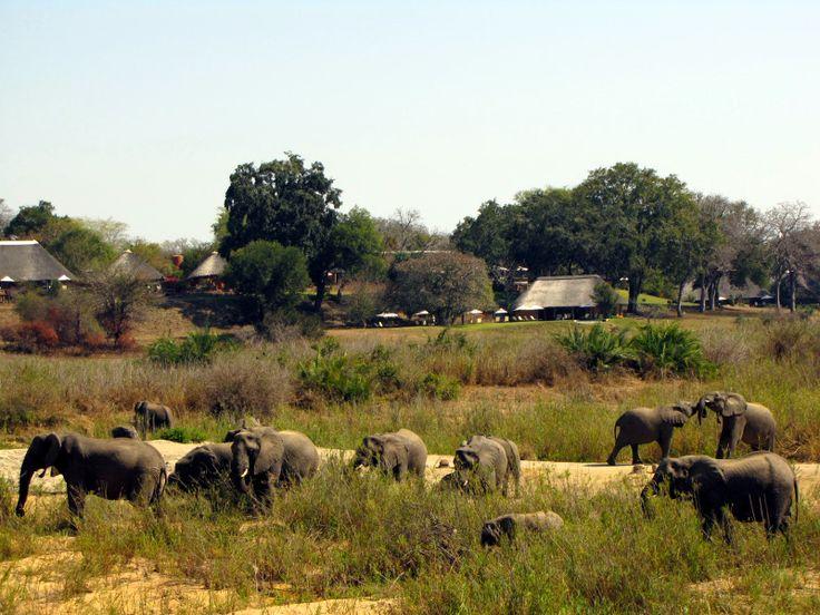 Staying at Mala Mala Main Camp   African Safaris