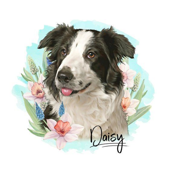 Custom Pet Portrait Digital Border Collie Dog Portrait