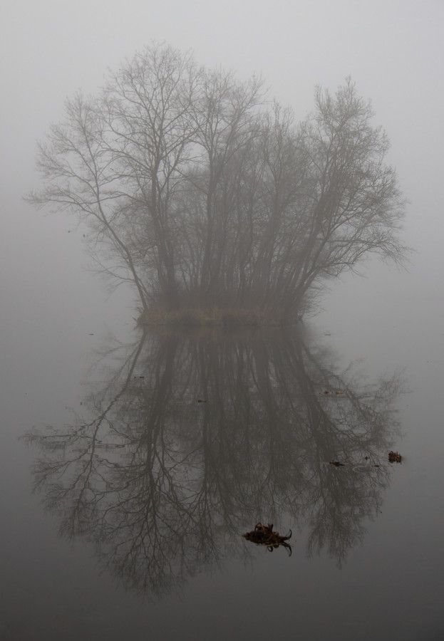 Misty Symmetry by Köles Mihály on 500px