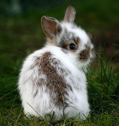 oh goodnesssss, it's a bunny!  Thanks, Chrissy!  xoxo
