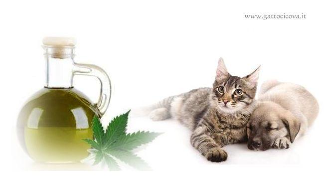Olio di Canapa nel Gatto e Cane