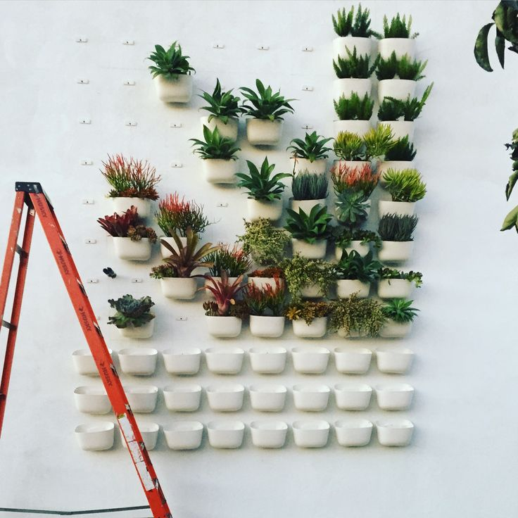 Shop Pigment Living Wall Installation - North Park, San Diego