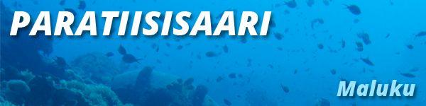 Häikäisevän valkoisen hiekkarannan reunustama ja upean koralliriutan ympäröimä asumaton Paratiisisaari on erinomainen kohde luonnon rauhaa ja yksityisyyttä arvostaville matkaajille. mainitsemalla varatessaan lomapaketit.fi saa maksutta käyttöönsä päiväksi pikaveneen kapteeneineen (arvo 140€)