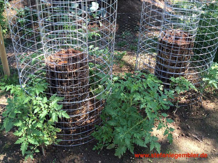 Tomaten anbauen - eine tolle Methode Tomaten anzubauen! Auf wenig Platz eine große Menge Tomaten ernten.