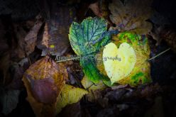 Love in the leaves