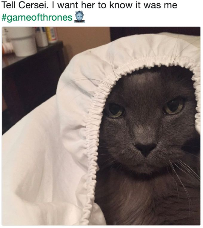Tell Cersei It Was Me Cat Meme