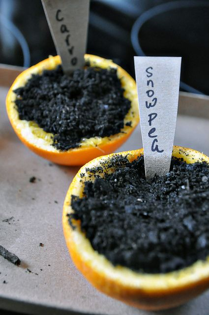 The orange becomes rich compost when the plant goes right into the garden!