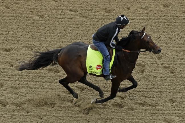 Preakness Picks 2016: Predictions and Odds for All Horses in the Lineup   Bleacher Report