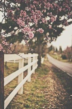 Que paz esse lugar dá, queria saber onde é.. ♥ ♥