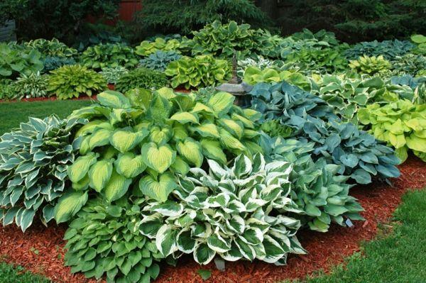 Funkien Pflanzen – toll für den Garten und für die Küche – #den #die #Funkien #für #Garten #