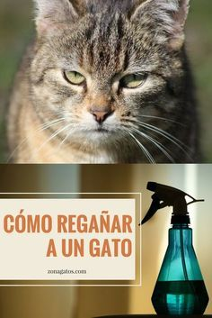 Animals And Pets, Cute Animals, Harry Styles Wallpaper, Cat Behavior, Mundo Animal, All About Cats, Catio, Cat Toys, Dog Treats