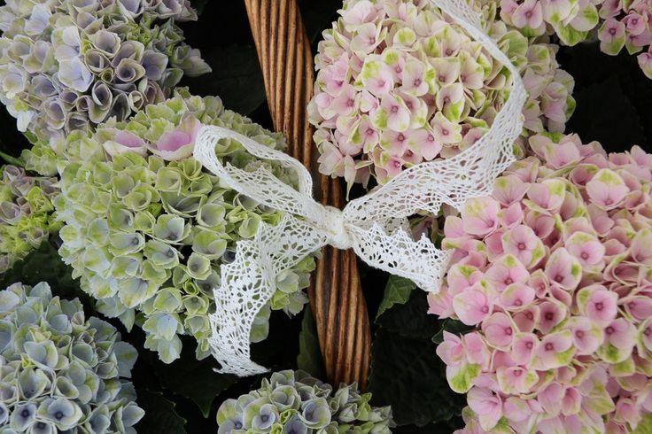 Hortensia Diy, med Magical Hortensia i gåvokorg med spets, design Diy Sweden