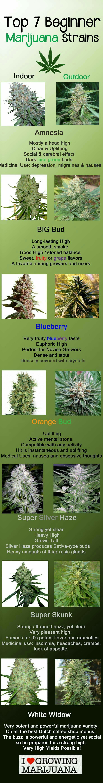 Top 7 marijuana strains for beginners. Easy to grow cannabis strains. Newbie weed strains.