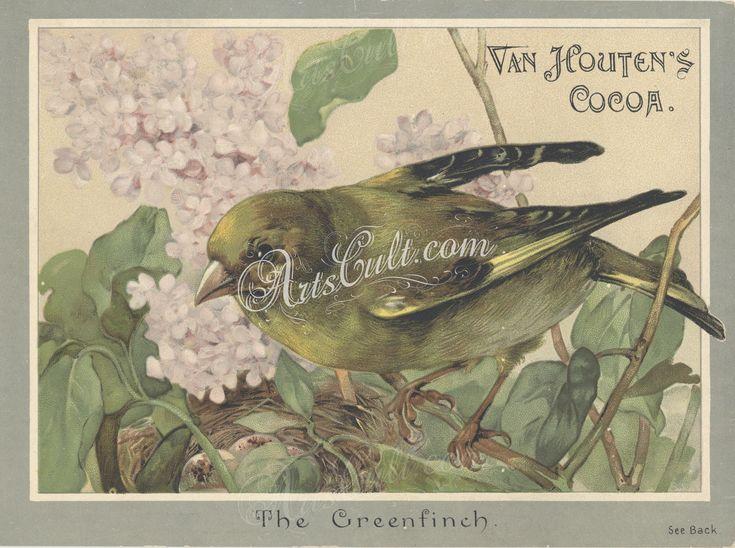 0592-Bird, Greenfinch      ...