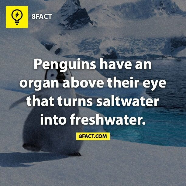 This, my friend, is just one of the many reasons why penguins are amazing!