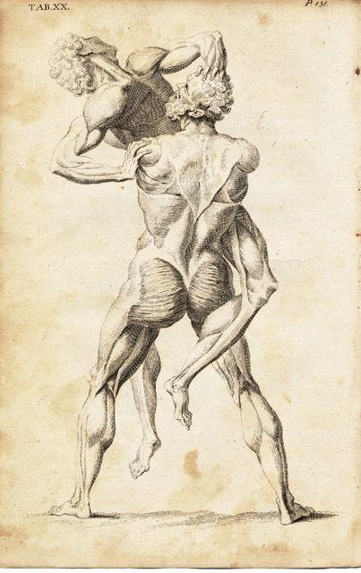 William Cheselden (1688 - 1752), Hercules and Antaeus (17xx) from Anatomy of the Human Body (1713).