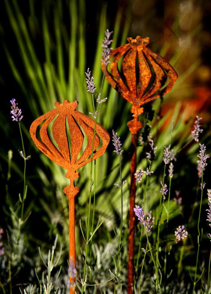 Poppy Seed Heads, Looks Great In A Patio Pot