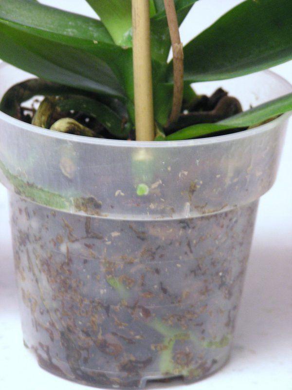 Orchideen Pflegen und reiche, schöne Blüten zu Hause bewundern