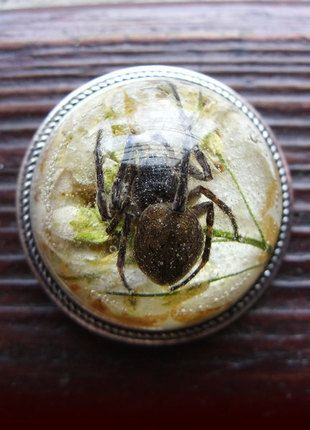 Kup mój przedmiot na #vintedpl http://www.vinted.pl/akcesoria/bizuteria/13650195-broszka-z-prawdziwym-pajakiem