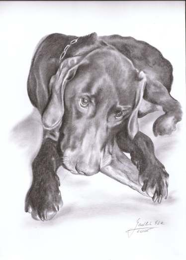 Custom 12 x 16 pencil drawing of your pet from your by EwaGawlik