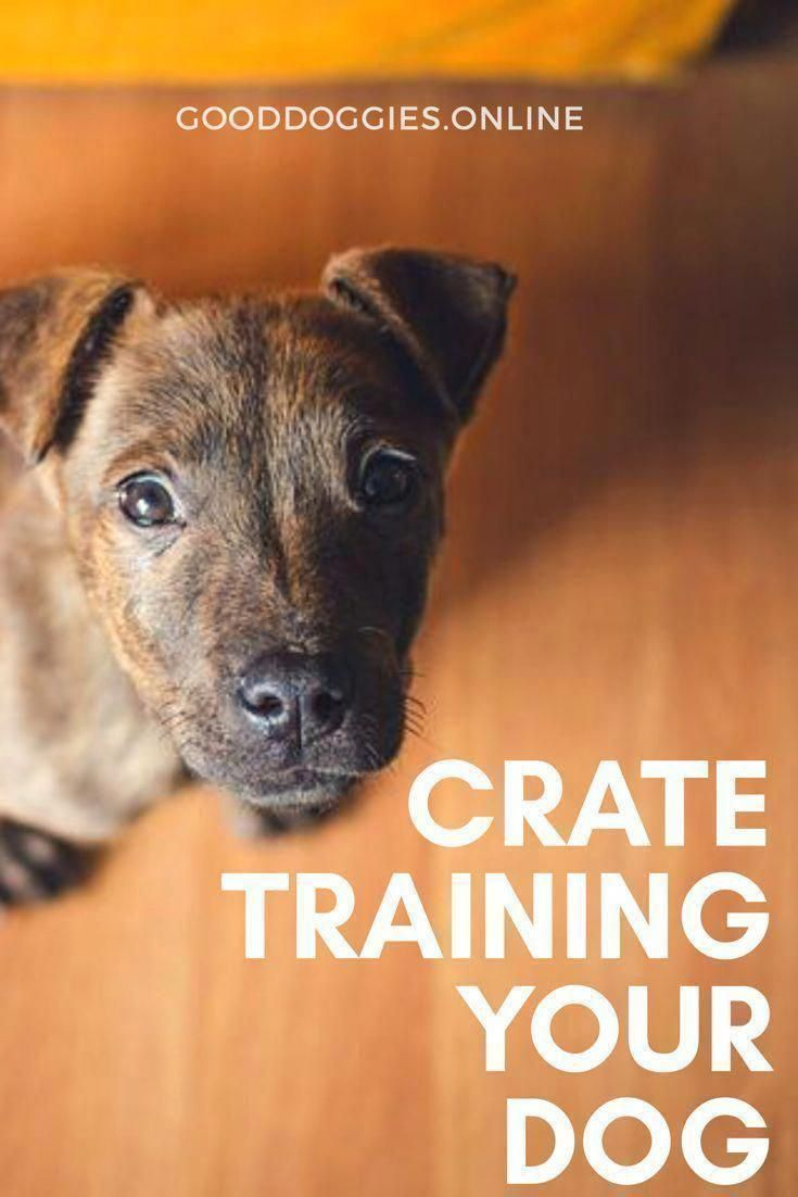Crate Training Your Puppy Or Adult Dog Can Be One Of The Best