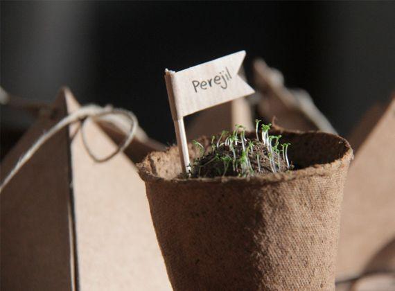 Bombas Guía de 6 semillas de aromáticas por EcoQuchu, 19,90 EUR