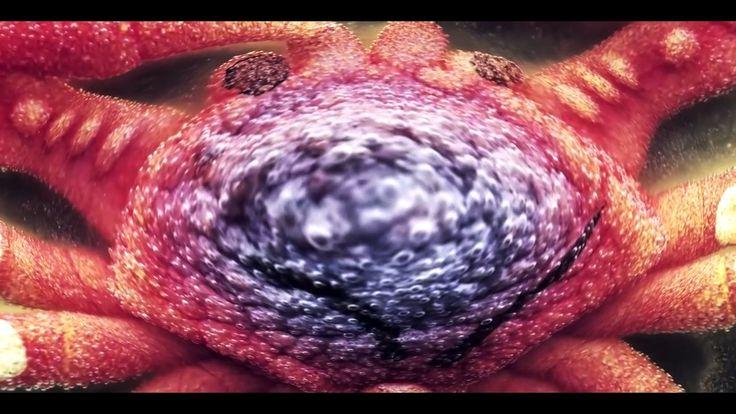 Ween - Mutilated Lips (Trippy song/video) https://www.youtube.com/watch?v=IT89_wmR8a8