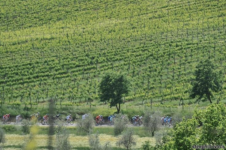 Umbria vineyards