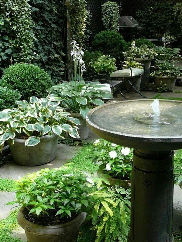 .fountain birdbath. t